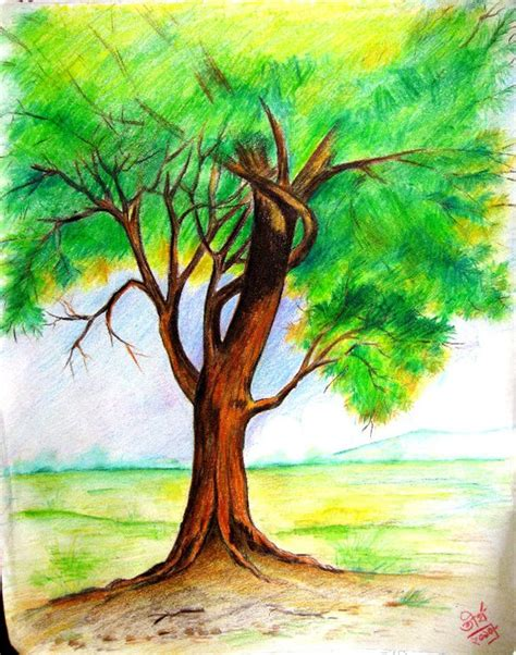 pencil and canvas tree in colored pencils