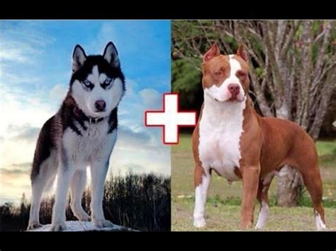 how to breed dogs how 100 years of changed these popular breeds vidoemo emotional