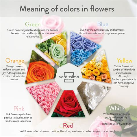 roses colors meaning color meaning verdissimo