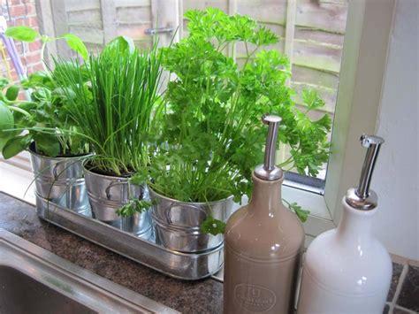 kitchen gardening ideas kitchen gardening ideas 28 images vegetable garden
