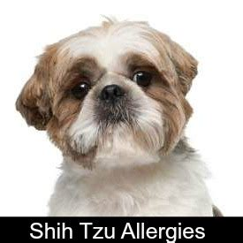 shih tzu allergy free shih tzu puppy weight chart calculate the size of a tzu