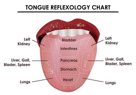 Detoxing White Tongue by Tongue Reflexology Chart Free Vector Stock