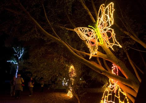 Holiday Events Activities In Phoenix Page 2 Tucson Zoo Lights