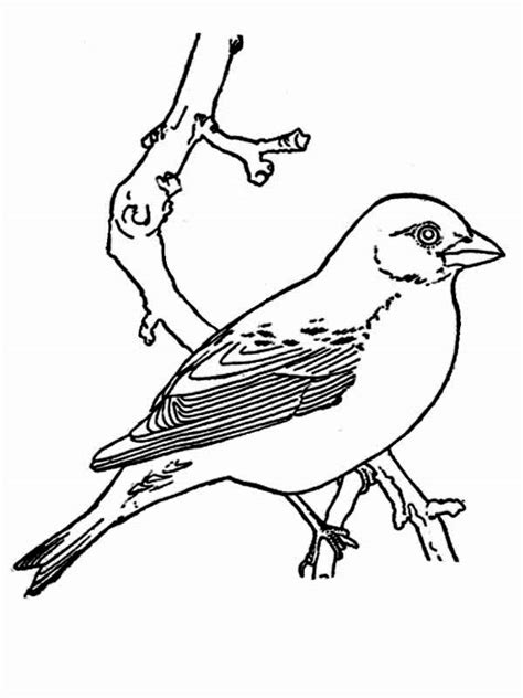 coloring page of a robin bird spring robin coloring pages coloring home