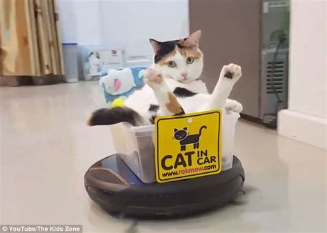 Cat Sitting At Table Meme - feline hitches a ride on a customized roomba turned cat