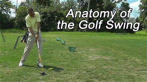 anatomy of a golf swing golf swing speed the muscles used to generate club head