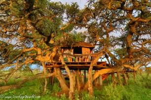 Treehouse Master Com - mokala s treehouse with a view africa geographic