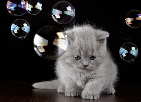 bobble kitten 10 corporate jargon terms as defined by cats catster