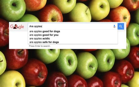 are apples for dogs questions about food on business insider