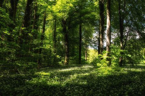 imagenes hd bosques wallpapers hd bosques parte 25 im 225 genes taringa