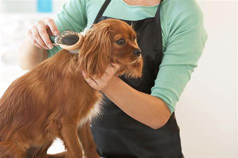 can you bathe a 6 week puppy grooming basics to make your pooch look his best