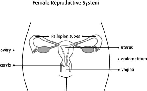 reproductive system diagram se 10 reproductive system diagram se 10 gallery how to