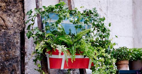 balkonpflanzen ueber die urlaubszeit retten