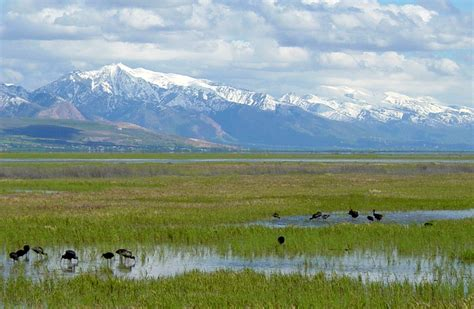 bear river migratory bird refuge field trip kcpw