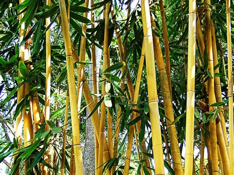 Coklat Kurma Batang gambar pohon cabang menanam tekstur makanan hijau