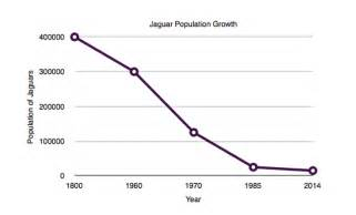 What Is The Population Of Jaguars Population Growth