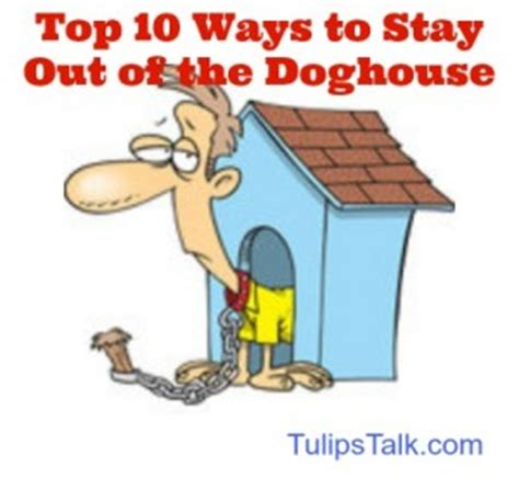 stay out of the dog house eden florist s top ten ways to stay out of doghouse