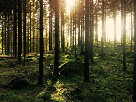 kostenlose foto baum natur wald ast licht stra 223 e sonnenlicht blatt blume gr 252 n kurve kostenlose foto landschaft baum natur wald gras wildnis ast licht sonnenlicht morgen