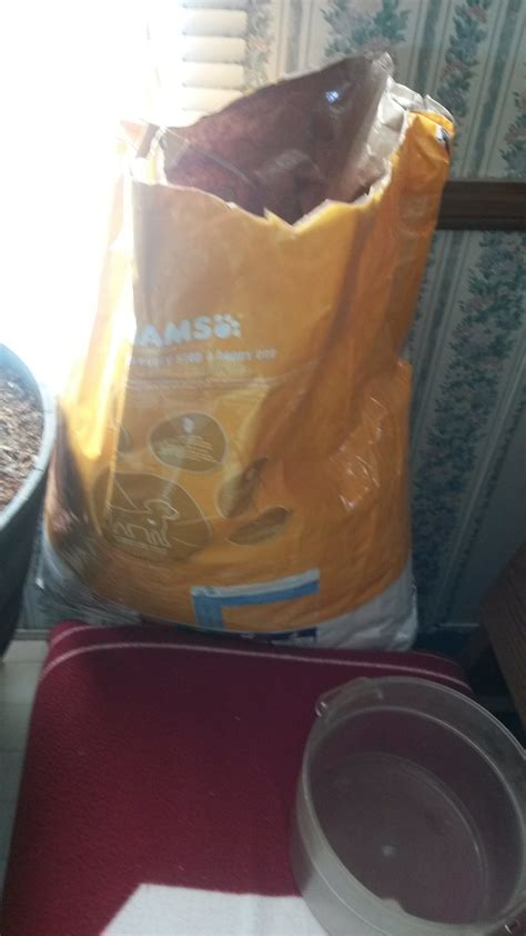 my pomeranian has diarrhea top 616 complaints and reviews about iams food page 4