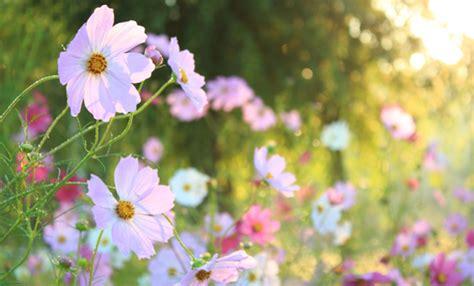 www fiori di bach fiori di bach come funzionano leitv