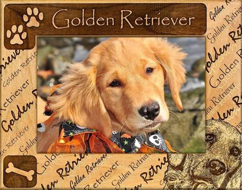 common golden retriever names golden retriever names images