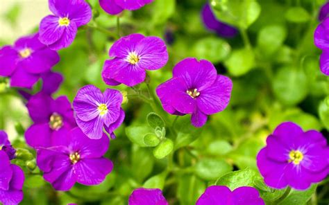 google images flower purple flower wallpaper android apps on google play