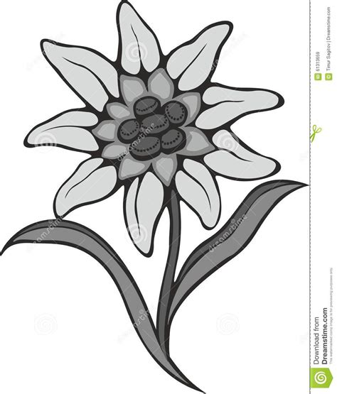 tattoo flower logo black silhouette outline edelweiss leontopodium flower