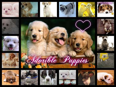 images of puppies puppies images puppies hd wallpaper and background photos 35092878