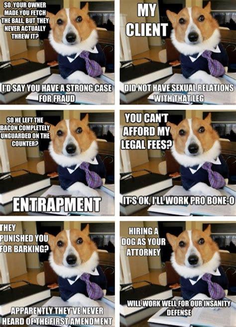 Corgi Lawyer Meme - a corgi lawyer i couldn t help it pinterest