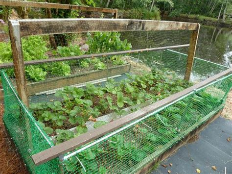 Planter Box Wa 17 best images about planting at the on