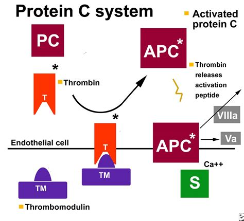 c protein coagulation protein c deficiency symptoms treatment to avoid