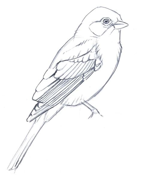 how to draw doodle birds best 25 bird line drawing ideas on mixed