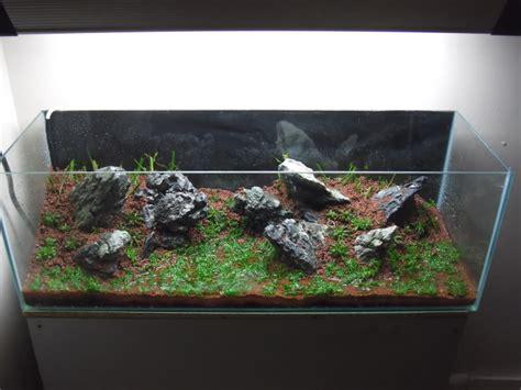 aquascape zonder co2 een aquarium opstarten 5 tips voor een probleemloze start