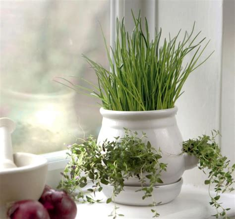 kitchen herb pots ceramic kitchen herb pot white