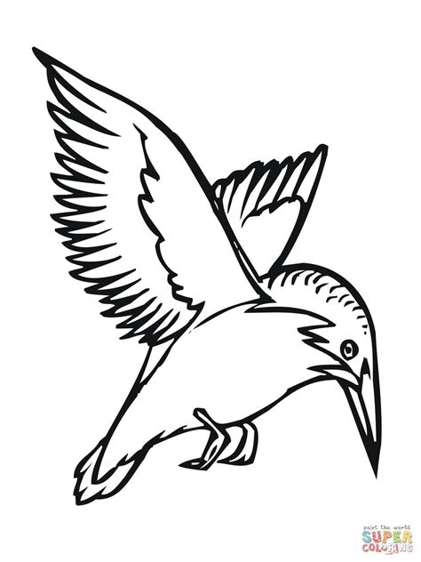 kingfisher coloring pages flying kingfisher coloring page free printable coloring