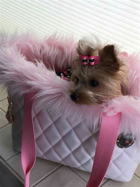 teacup yorkie clothes best 25 yorkie clothes ideas on yorkie teacup puppies teacup yorkie and