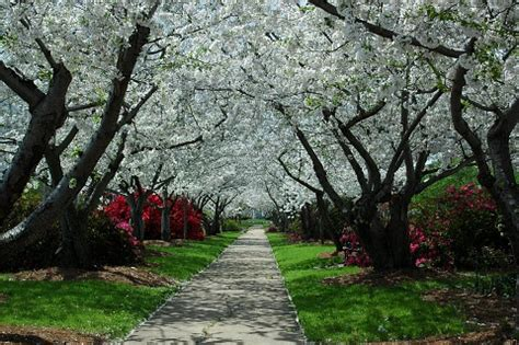 top 10 beautiful tree tunnels of the world toptenz.net