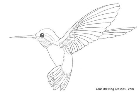 hummingbird nature drawings pictures drawings ideas