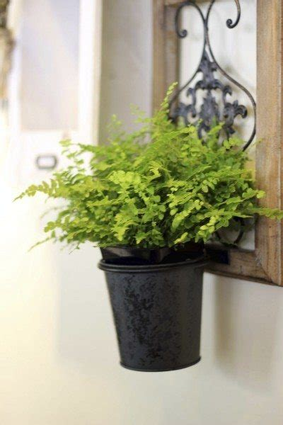 misting boston ferns tips  increasing humidity