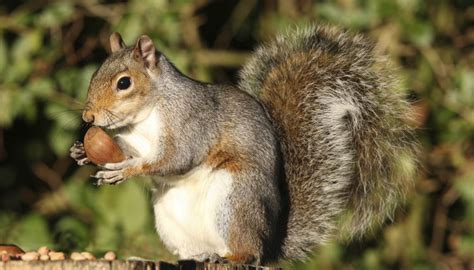 age   baby squirrel  pictures