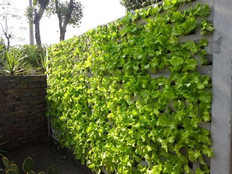 Vertical Garden Lettuce lettuce wall vertical gardening grow food in any small