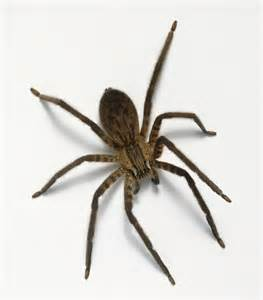Garden Spider Or Bad Spider How Do I If A Spider In My Garden Is