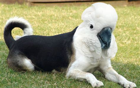 bird dogs dirds the internets gift is disturbing bird mashups beautiful decay