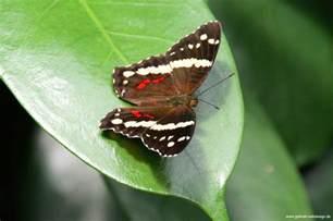 jardins des papillons hunawihr alsace