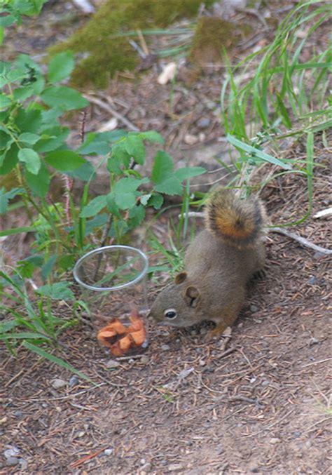 Chipmunk Finds the Bait | Flickr - Photo Sharing!