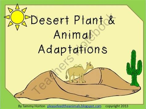 succulents plants adaptations for kids best 25 desert animals and plants ideas only on pinterest
