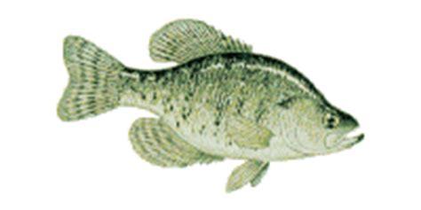 imagenes para paginas web gif gifs animados de im 225 genes de peces gifmania