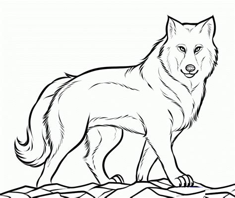 Free Printable Wolf Coloring Pages For Kids Wolf Coloring Pages