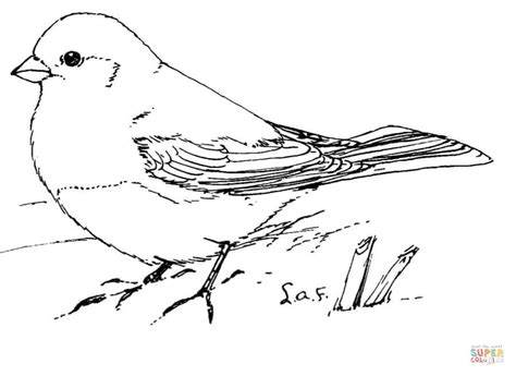 junco bird coloring page junco coloring pages free coloring pages junco bird
