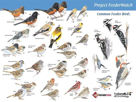 identifying backyard birds project feederwatch teaching the hudson valley